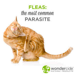 fleas, the most common parasites