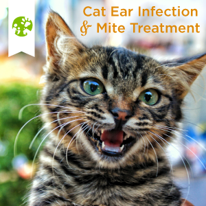 cat ear infection