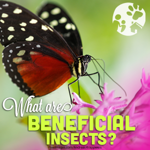 what are beneficial insects