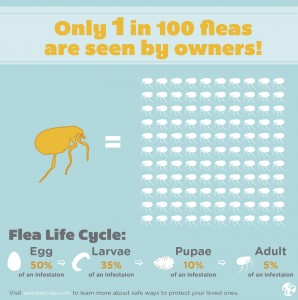 You can see only 5% of fleas! The rest are invisible.