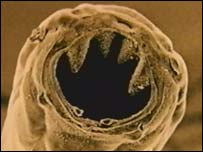 Are Hookworms in your soil? « Wondercide Blog
