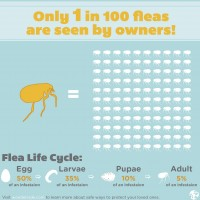 Flea Invasion Infographic