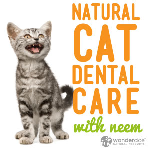 Natural Cat Dental Care