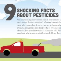 why-pesticides-are-bad-wondercide