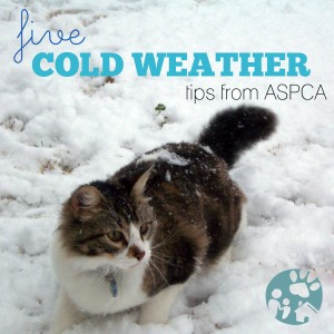 Pet Health: 5 Cold Weather Tips From the ASPCA