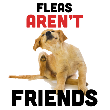 Fleas aren't friends