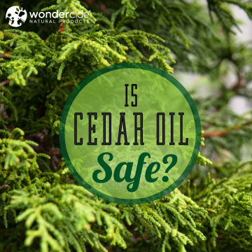 is-cedar-oil-safe-wondercide