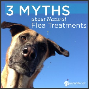 3 Myths About Natural Flea Treatments