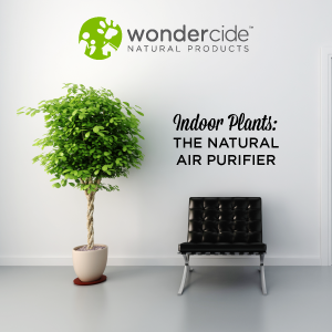 indoor plants: the natural air purifier