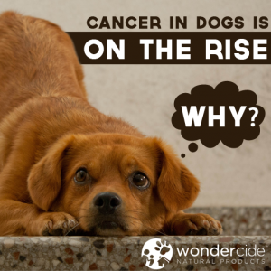 Cancer in dogs is on the rise. Why?