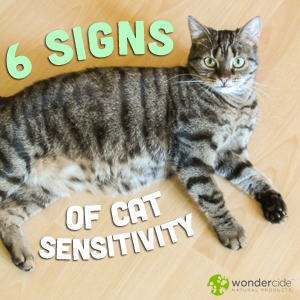 6 signs of cat sensitivity
