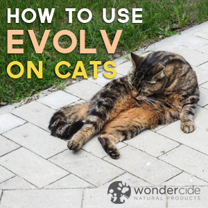 Using Evolv on cats