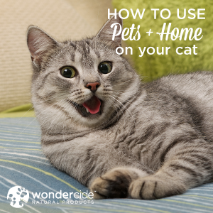 pets + home for cats