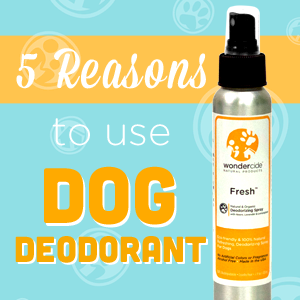 5 Reasons to Use Dog Deodorant - A Natural Pet Product - Wondercide