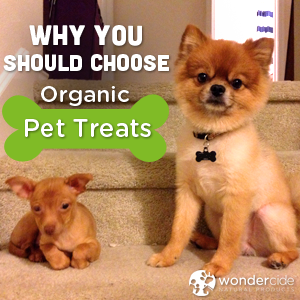 Why organic pet treats are good for your cat or dog