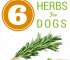 6 Herbs for Dogs