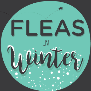 Fleas in Winter: What You Need to Know [FAQ] « Wondercide Blog