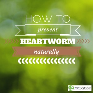 Heartworm Prevention-4