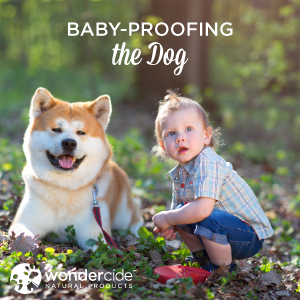 baby-proofing the dog