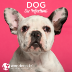 dog ear infections