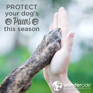 protect your dog's paws