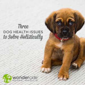 3 dog issues to solve holistically