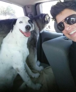 Senior Dogs Mercy and Diamond Get Ready For a Ride with Operations Manager, Amanda!