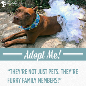 Adopt-A-Dog Month | Whitney | Love-A-Bull