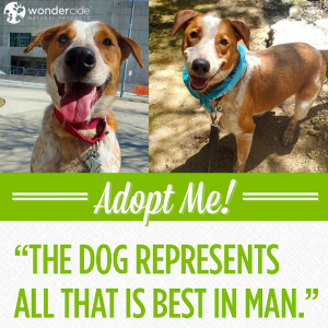 Adopt-A-Dog Month | Max | Austin Pets Alive!