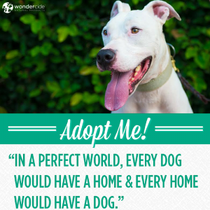 Adopt-A-Dog Month   Rusty Sledge   Austin Pets Alive!