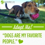 Adopt-A-Dog Month | Penelope | Austin Humane Society