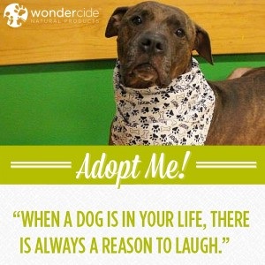 Adopt-A-Dog Month | Brodie | Austin Pets Alive!