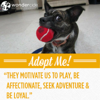 Adopt-A-Dog Month | Marie | Austin Pets Alive!