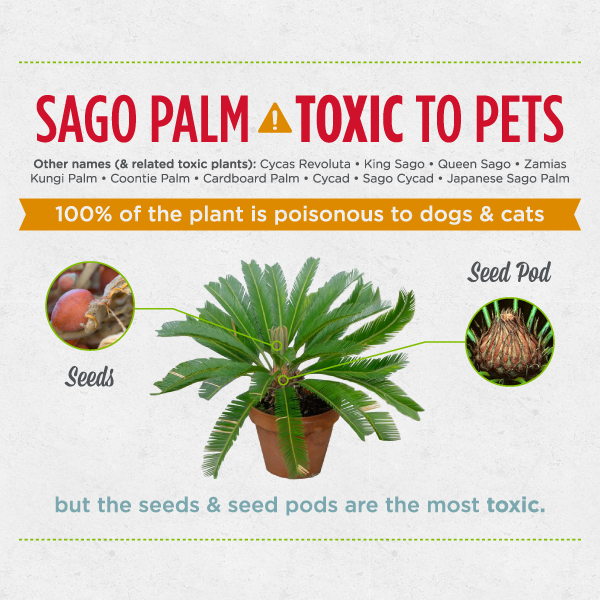 6 seriously dangerous plants for dogs cats wondercide blog - Toxic plants for dogs and cats the danger behind flowers ...