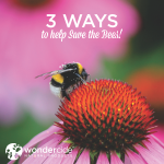 3 ways to save the bees