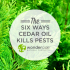 6 ways cedar oil kills pests