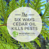 The Six Ways Cedar Oil Kills Pests