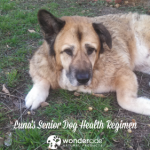 Lunas Senior Dog Health Regimen