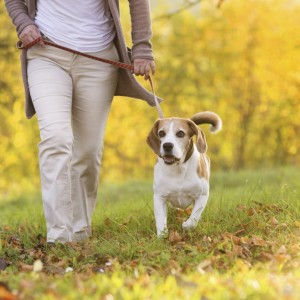 4 Pro Tips for Leash Training Your Dog