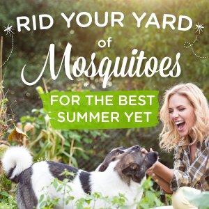 5 Ways To Get Rid Of Mosquitoes In Your Yard Wondercide Blog