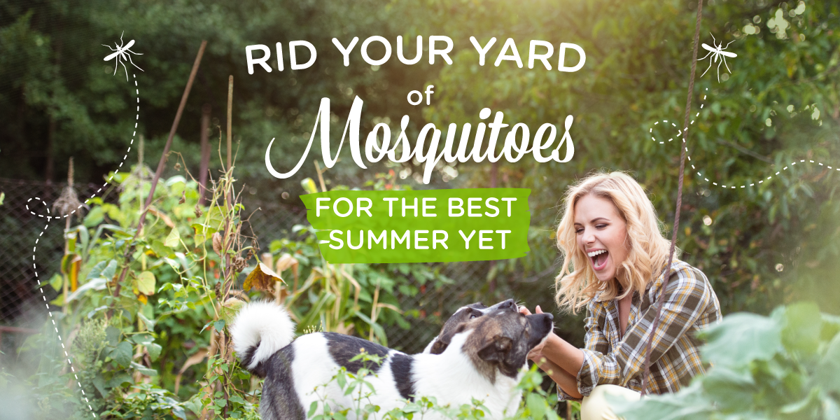 5 ways to get rid of mosquitoes in your yard wondercide blog Ways to get rid of mosquitoes in your house