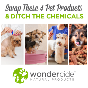 swap-these-pet-products-ditch-the-chemicals