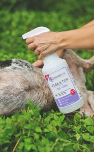 Flea & Tick Control for Pets + Home Lifestyle