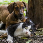 Pet Lyme Heartworm Disease Prevention
